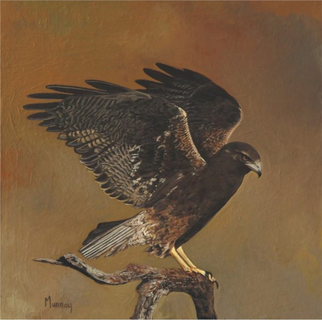 Karla Murray Painting Hawk Stretching Its Wings Oil on Board