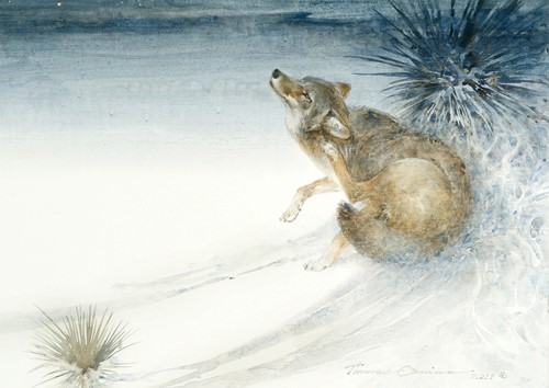 Thomas Quinn Painting Coyote Nocturne Watercolor