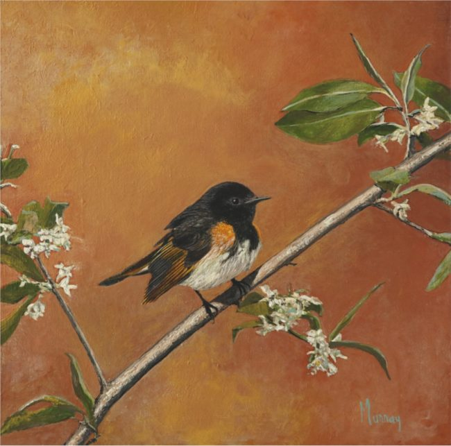 Karla Murray Painting American Redstart at Sunset Oil on Board