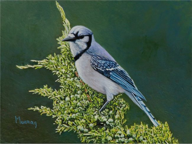 Karla Murray Painting Blue Jay with Juniper Berries Oil on Board