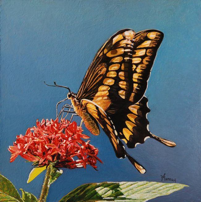 Karla Murray Painting Sipping Nectar (Swallowtail Butterfly) Oil on Board