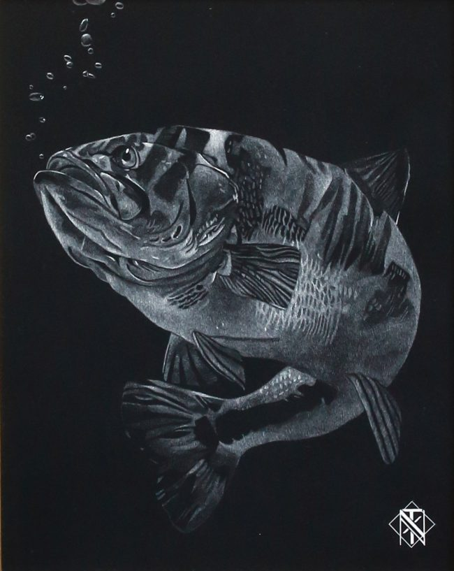 Nelson Tucker Scratchboard Large Mouth Bass Scratchboard
