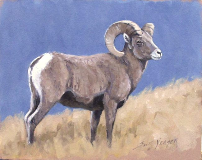Scott Yeager Painting Bighorn Oil on Board