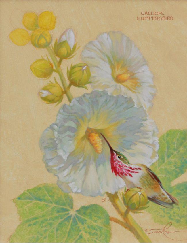 Ezra Tucker Painting Calliope Hummingbird & White Hollyhocks Acrylic on Board