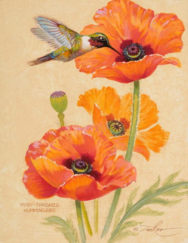 Ezra Tucker Painting Ruby-throated Hummingbird & Poppy Acrylic on Panel