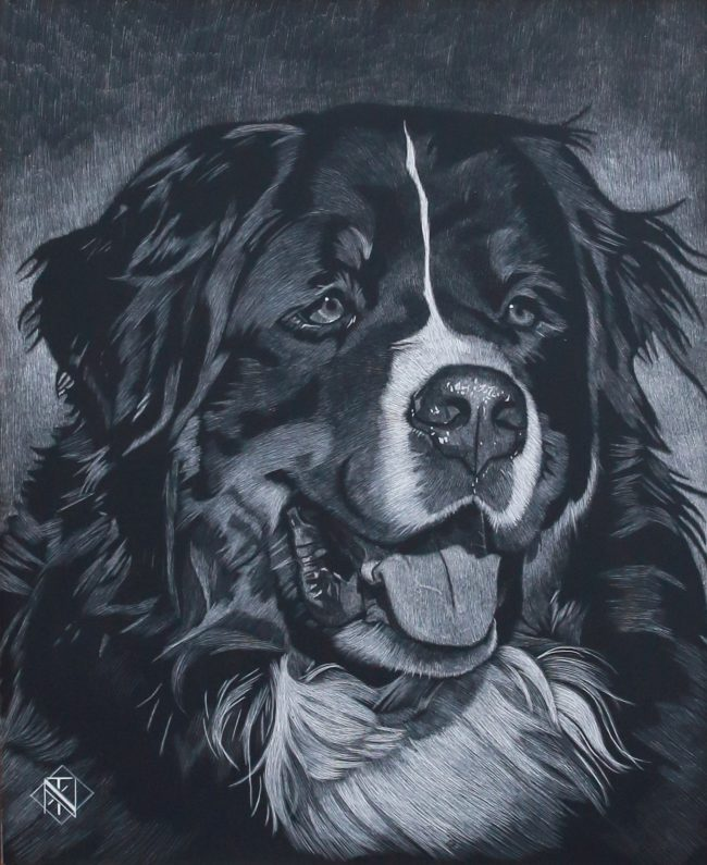 Nelson Tucker Scratchboard Bernese Mountain II Scratchboard