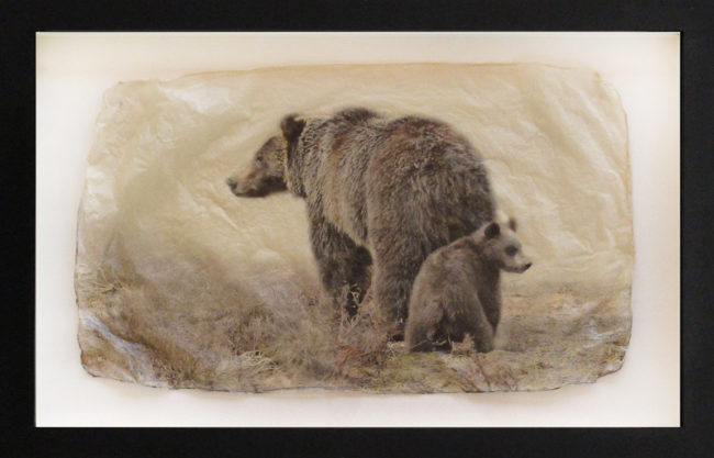 Pete Zaluzec Photography Bear Behind Gampi Print