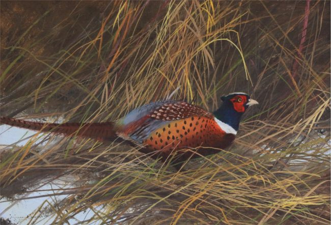 Michael Coleman Painting Ringneck Pheasant Oil on Board