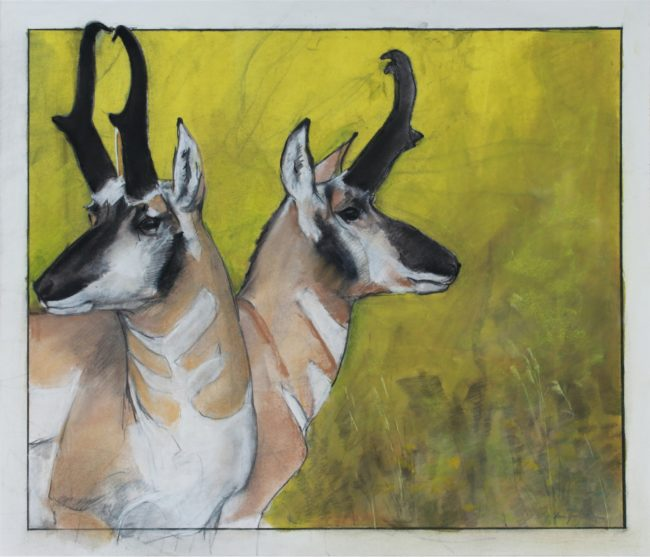 Donna Howell-Sickles Mixed Media Pronghorn Mixed Media on Paper
