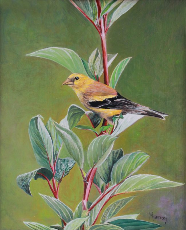 Karla Murray Painting Daily Visitor (American Goldfinch) Oil on Board