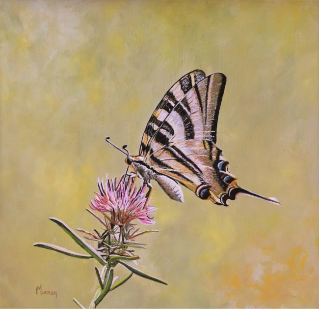 Karla Murray Painting Swallowtail on Thistle Oil on Board